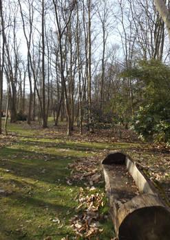 Log Seat Among The Trees