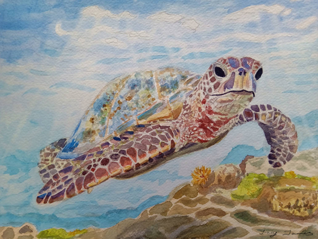 Sea Turtle by BotanicalGirl