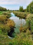 Verdant River