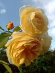 Golden Blooms Of Autumn