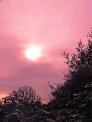 Rose-Tinted Sky