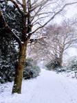 A Walk Down Snowy Lane