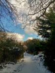 Snowy Wanderings