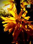 A Blaze Of Petals by BotanicalGirl