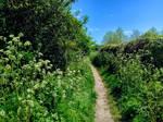 Wild Flower Lane