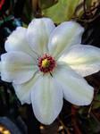 Dawn Of Hope by BotanicalGirl
