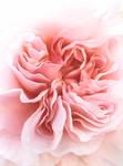 Ballet Ruffles by BotanicalGirl