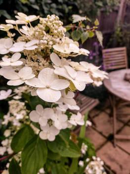 Bridal Bouquet Of The Garden