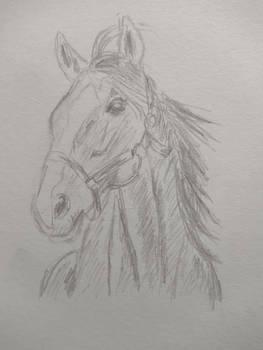 Horse (15 minute sketch)