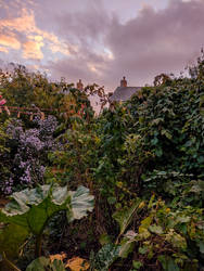 Beyond The Vegetable Patch