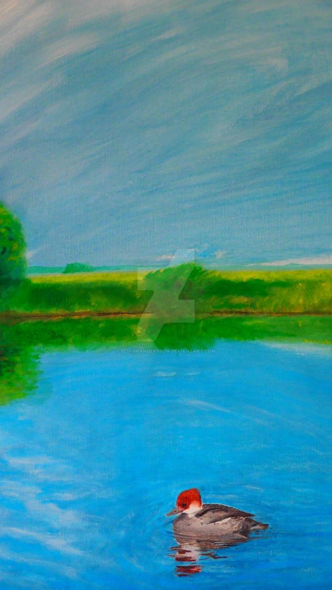 A smew in a bird pond. by BeironAndersson