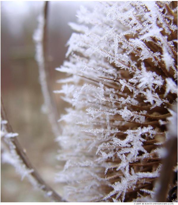 Winter Wonderland 001 by Frank-Beer