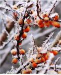 Winter Wonderland 003 by Frank-Beer