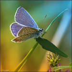 Little Creatures 060 by Frank-Beer