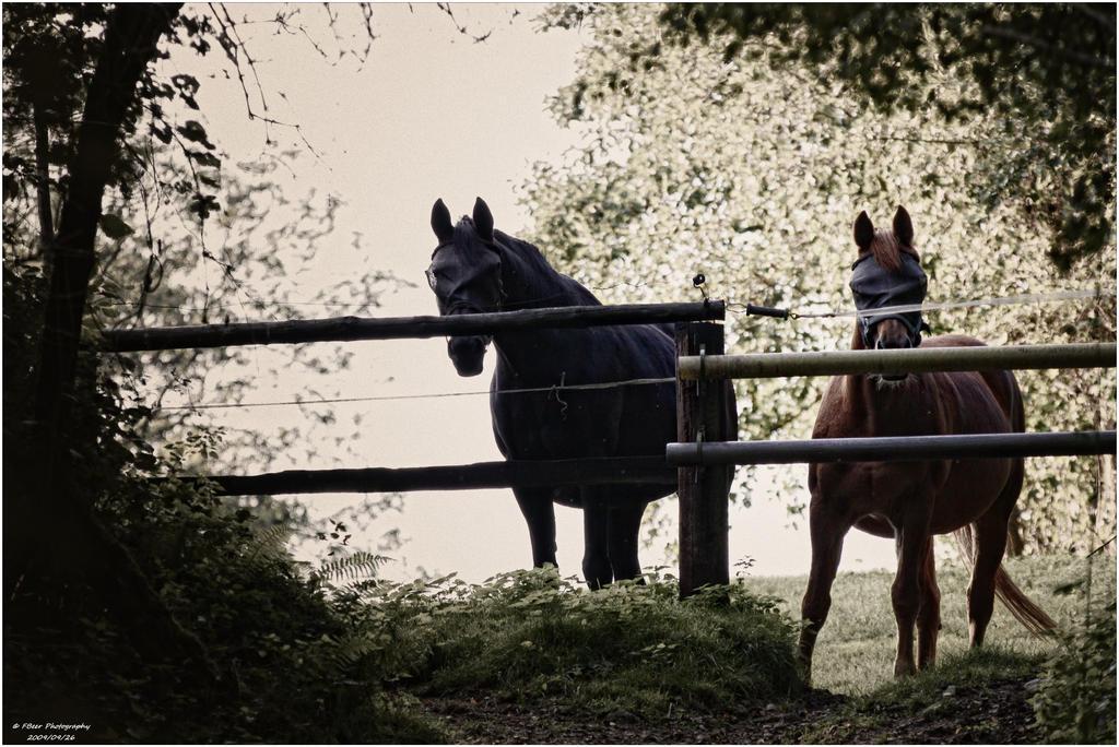 Horsemen by Frank-Beer
