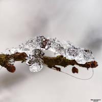 Winter Wonderland 012 by Frank-Beer