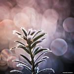 Winter Wonderland 015