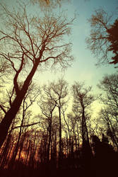 .:Sunset in the Forest:. by Frank-Beer