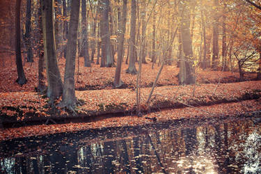 .: Golden Forest :. by Frank-Beer