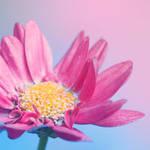 .: Pastel Colors :.