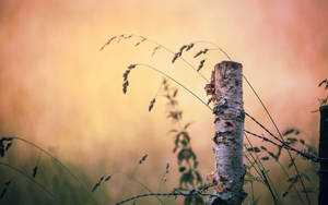 .: Herbstmorgen :.