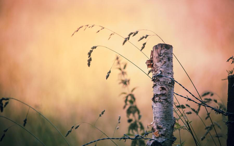 .: Herbstmorgen :. by Frank-Beer