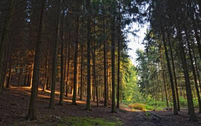 .: Dark Forest :.