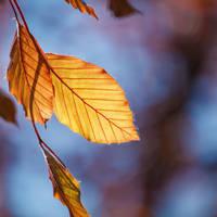 Fresh new leaves