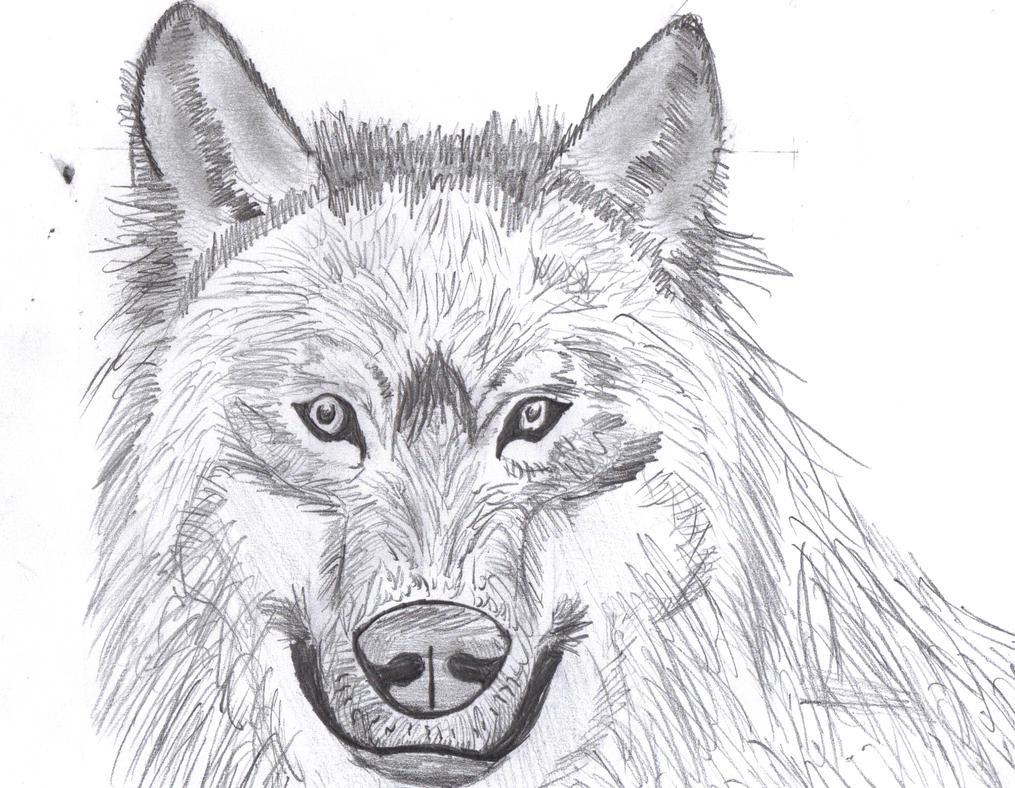 Galerie a dessin de Film204 New dessin  Wolf_draw__dessin___by_film204-d5sne88