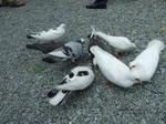 Nomin' Pigeons