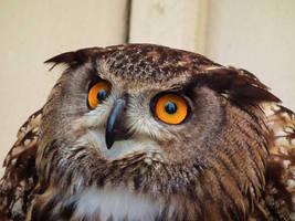 Psycho Owl by insolitus-mundus