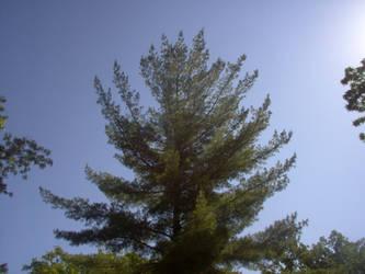 A Tree by HiddenCamera