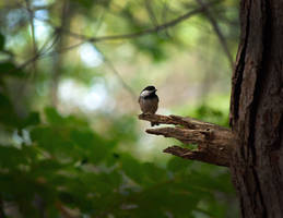 little big bird