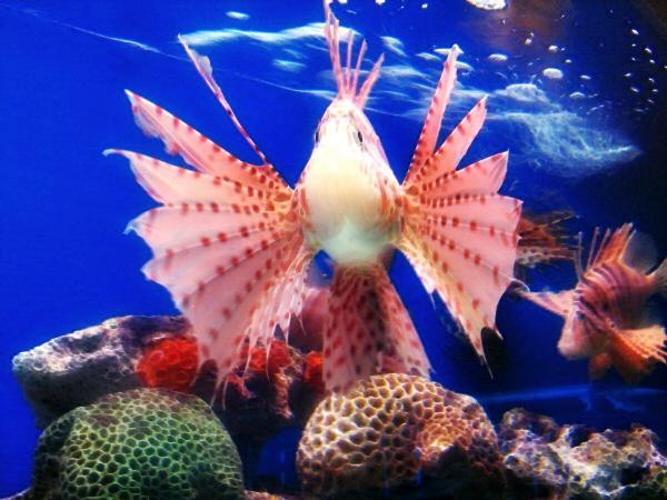 Strange japanese fish - photo#3