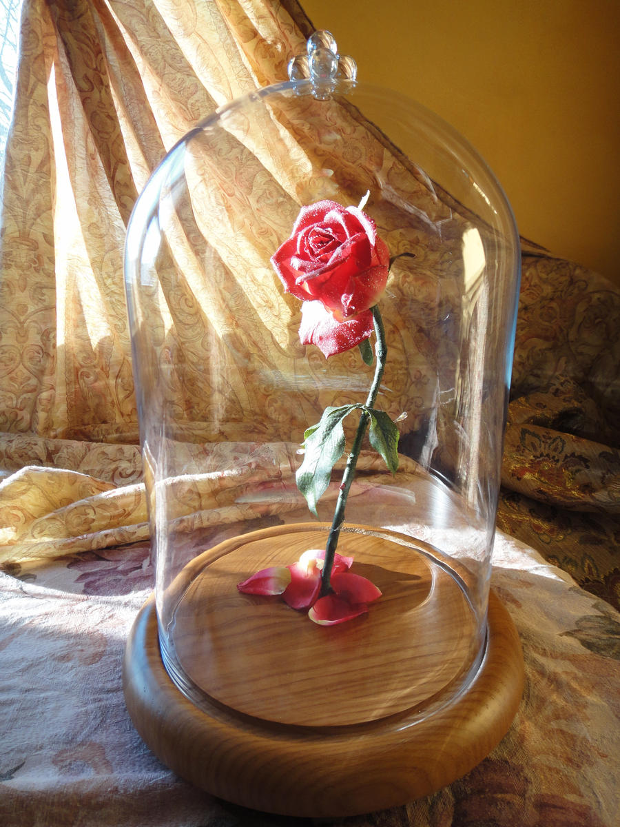 Beauty and the beast rose quote