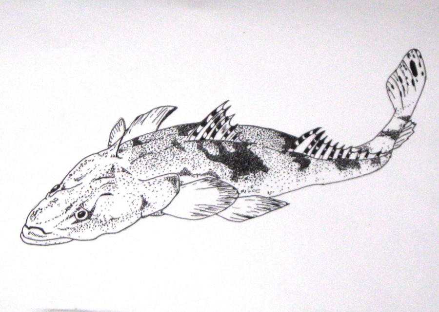 Distorted Fish in pen by Chihito