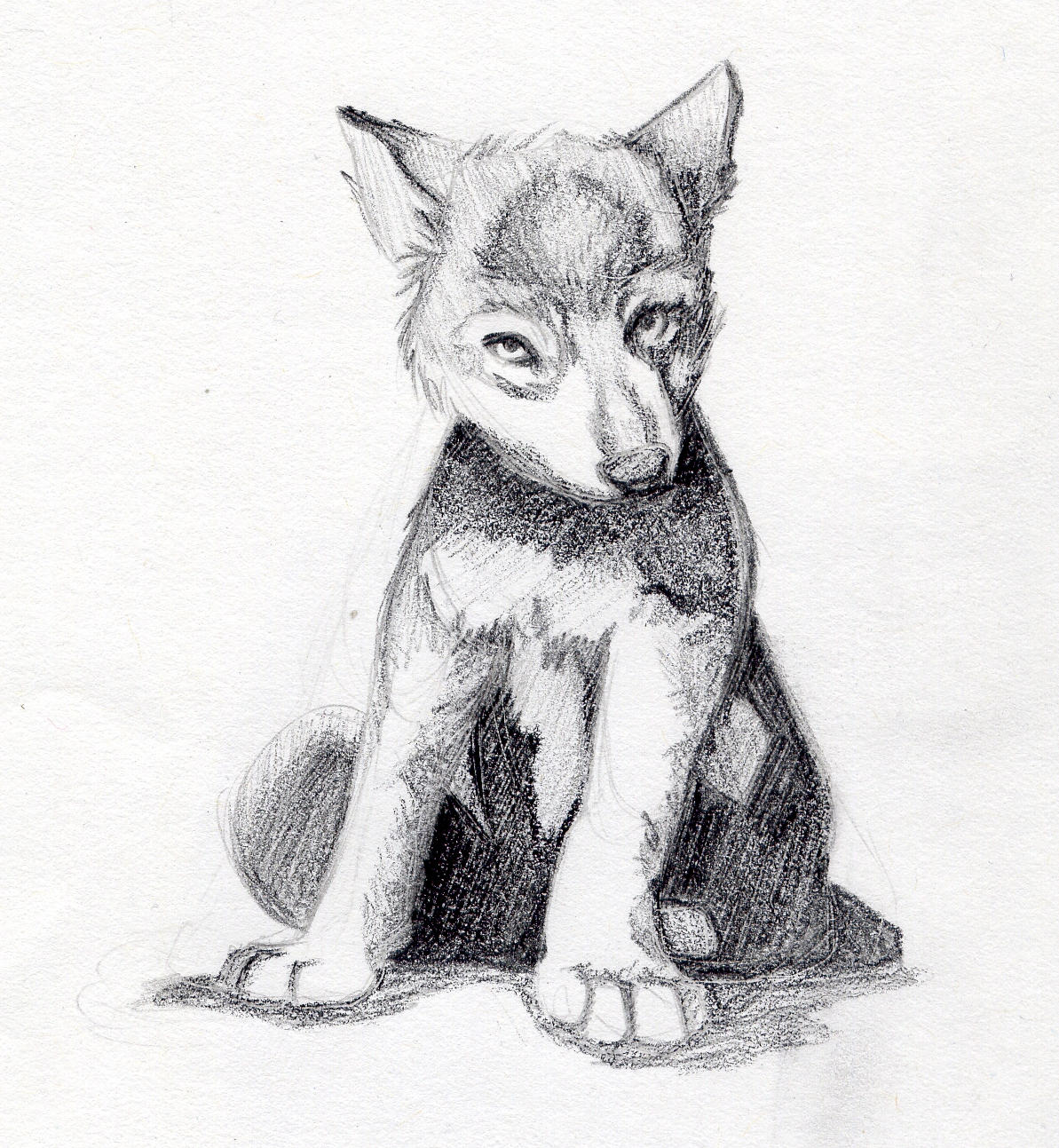 Uncategorized Wolf Pup Drawing wolf pup by taktera on deviantart taktera