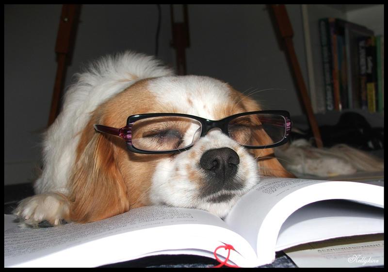 Dog In Uni House