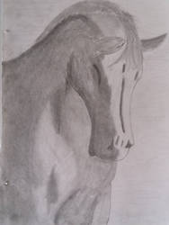 Horse drawing update