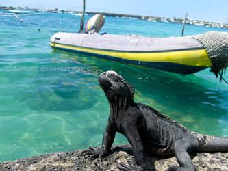 Galapagos' Extasis.