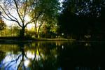 Half darkness in the park