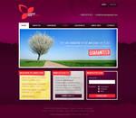 CCP: Web Design Concept