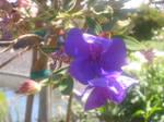 bend toward the sun by CamelliaRaspberry