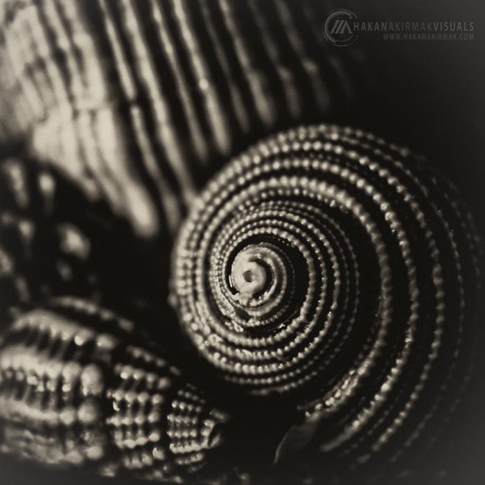 Seashells by akirmak