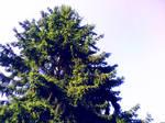 Simply - Tree