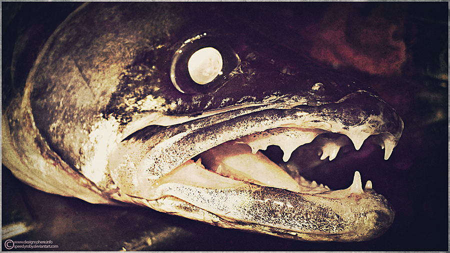 Fish by SpEEdyRoBy
