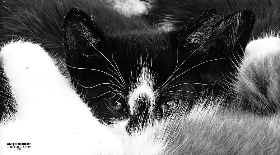 Little Cat by SpEEdyRoBy