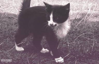 Little Cat 2 by SpEEdyRoBy