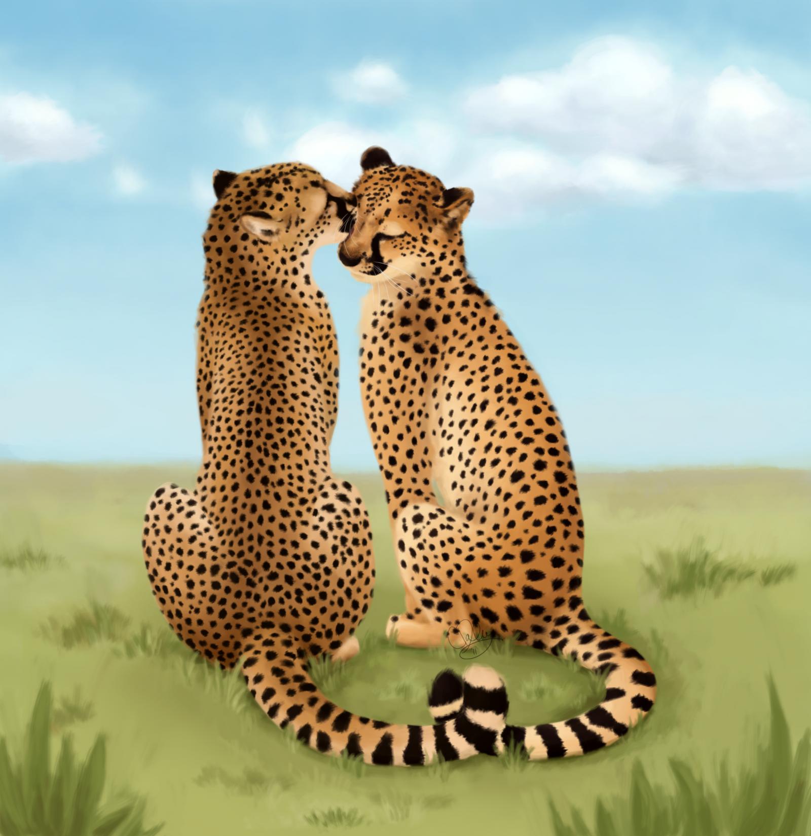 Cheetah Love-Valentines Day 11 by unistar2000