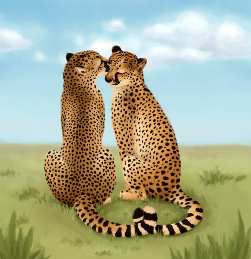 Cheetah Love-Valentines Day 11 by unistar2000